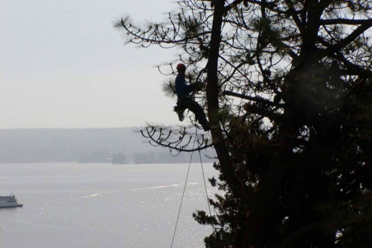 Man hanging on tree - Tree services in Seattle, WA